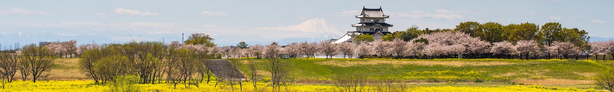 利根川の桜