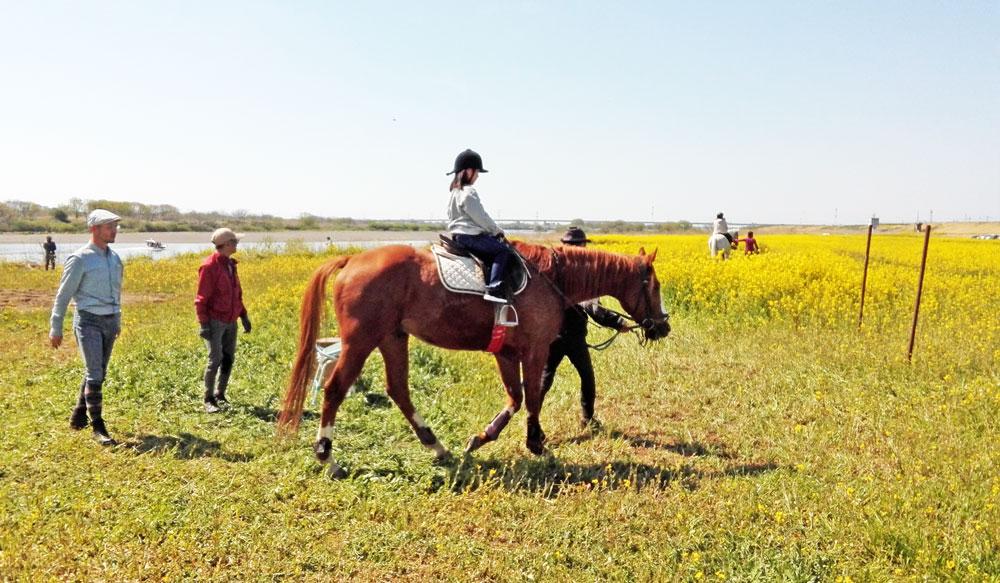 茨城県境町さかい河岸フェスティバル:乗馬体験
